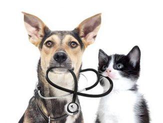Quid de l'assurance santé animale